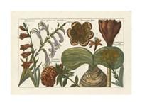 Botanical II Giclee