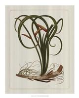 "Exotic Flora VI by Vision Studio - 14"" x 18"""