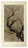"Plum Blossom Tree by Vision Studio - 23"" x 40"", FulcrumGallery.com brand"
