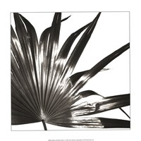 Black and White Palm I Giclee