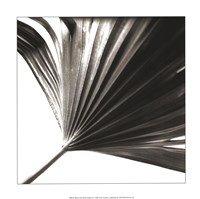 Black and White Palm II Giclee