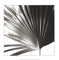 Black and White Palm IV Giclee