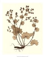 "Sepia Nature Study I by Vision Studio - 16"" x 20"", FulcrumGallery.com brand"