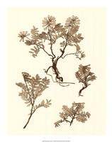 "Sepia Nature Study II by Vision Studio - 16"" x 20"", FulcrumGallery.com brand"