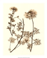 """Sepia Nature Study IV by Vision Studio - 15"""" x 20"""" - $22.49"""