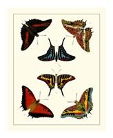 Butterflies II Framed Print
