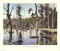 Summer Refuge, Wood Ducks Framed Print