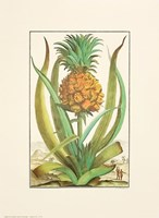 Pineapple Fine Art Print