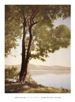Sunlit Trees I Fine Art Print
