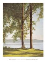 Sunlit Trees II Fine Art Print