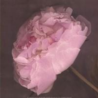 "Fleur by Erin Clark - 12"" x 12"""