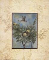 Giardino II Fine Art Print