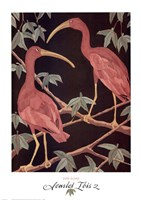 Scarlet Ibis 2 Fine Art Print