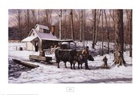 Sugar Bush Fine Art Print