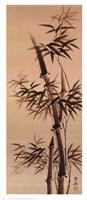 Bamboo Forever I I Fine Art Print