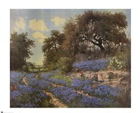 Blue Bonnet Trail Fine Art Print