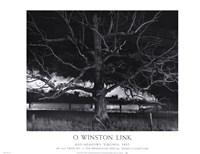 Max Meadows, Virginia, 1957 / NW 1643 Train No. 17 The Birmingham Special Passes a Giant Oak Fine Art Print