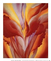 Red Canna Fine Art Print
