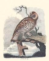 "Owl in the Snow by Paul Cezanne - 7"" x 9"""