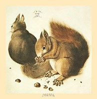 Squirrels Fine Art Print