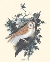 "Owl in the Woods by Paul Cezanne - 7"" x 9"""