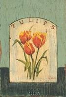 "Tulips by Thomas LaDuke - 11"" x 16"""