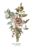 Anemones Simples Volubilis Fine Art Print