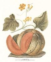 Melon - Persian Fine Art Print