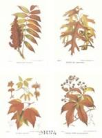 Leaves (Set of Four) Fine Art Print