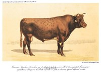 "Taureau-Ayrshire by Paul Cezanne - 12"" x 9"""