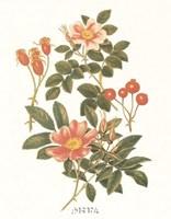 """Sweet Briar by Paul Cezanne - 10"""" x 12"""" - $10.49"""