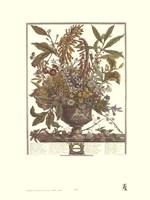 January/Twelve Months of Flowers, 1730 Fine Art Print