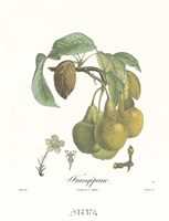 "Pears/Frangipane by Francois Langlois - 12"" x 18"""