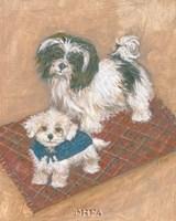 Kyo Leo Maltese Fine Art Print
