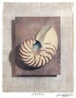 Seashell Study II Fine Art Print