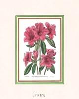 Azalea No. 2 Fine Art Print