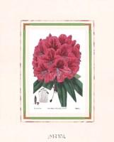 Rhododendron No. 2 Fine Art Print