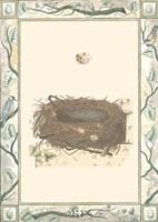 Woodland Nest II Framed Print