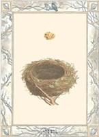 Woodland Nest IV Framed Print