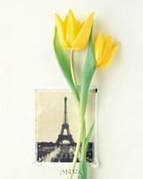 Tulip, Euro-Floral Framed Print