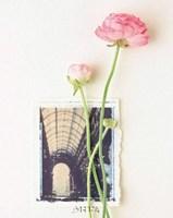 Peony, Euro-Floral Fine Art Print