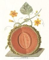 Melon - Cantalope Fine Art Print