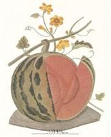 Melon - Watermelon Fine Art Print