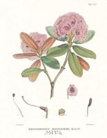 "18"" x 22"" Floral Botanical"