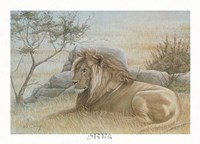 Golden Lion Fine Art Print