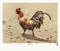 "Banty Rooster by LaVere Hutchings - 21"" x 18"""