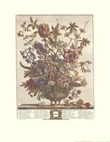 "February/Twelve Months of Flowers, 1730 by Robert Furber, 1730 - 17"" x 22"""