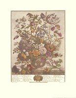 "May/Twelve Months of Flowers, 1730 by Robert Furber, 1730 - 17"" x 22"""
