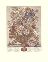 "June/Twelve Months of Flowers, 1730 by Robert Furber, 1730 - 17"" x 22"""