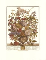 "July/Twelve Months of Flowers, 1730 by Robert Furber, 1730 - 17"" x 22"""